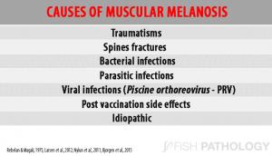causes of muscular melanosis